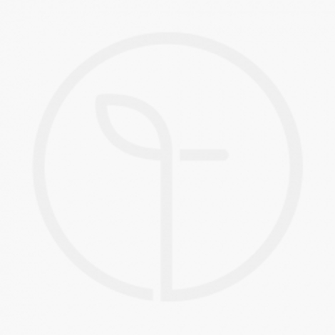 Banana Slices - Freeze Dried
